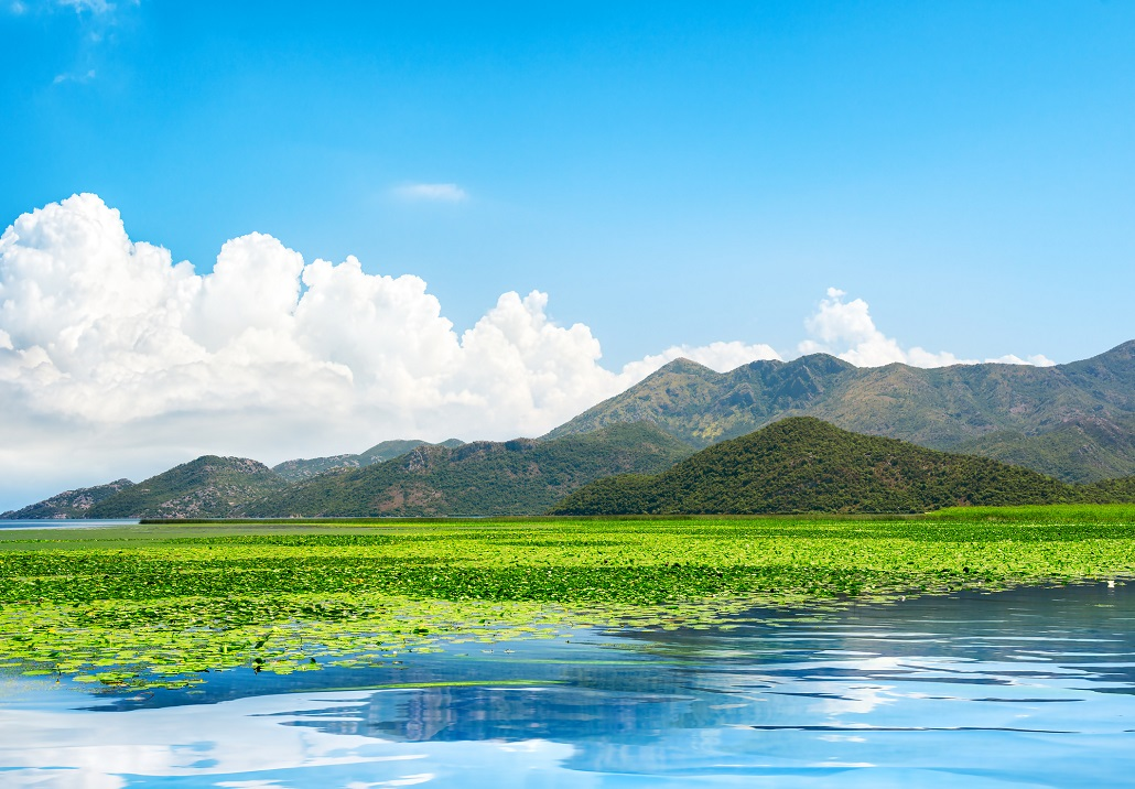 Скадарское озеро парк