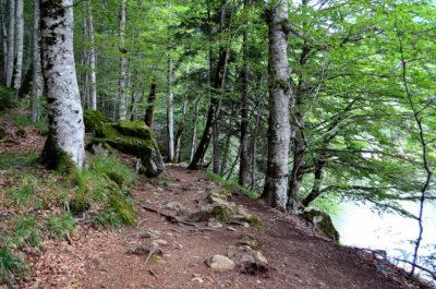 История заповедника Биоградская гора