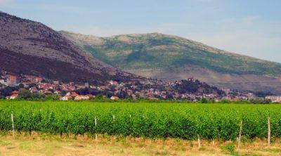 Виноградники и ландшафт города Требинье, Босния и Герцеговина