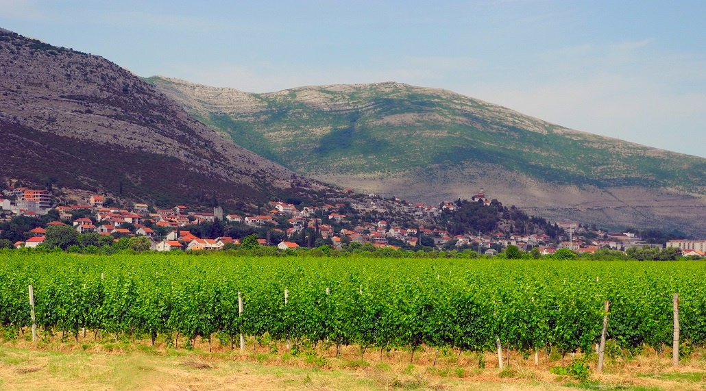 Vineyards and landscape of the city of Trebinje, Bosnia and Herzegovina.