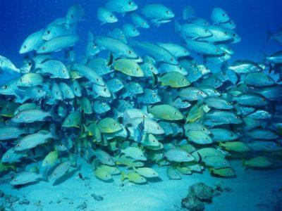 Морские обитатели Черногории