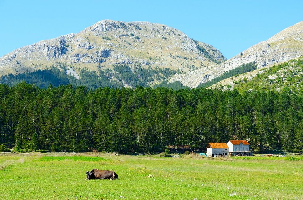 Деревня Негуши Черногория