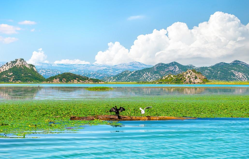 Птицы Скадарского озера