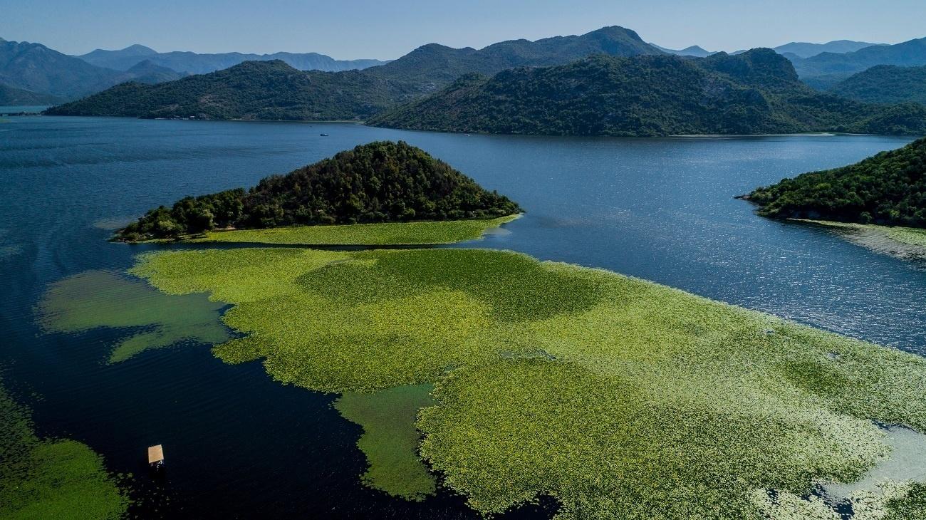 Скадарское озеро Черногории