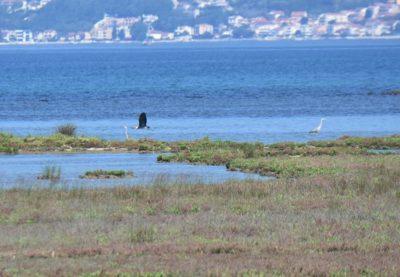 Ботанический парк Тиватская солила (птичий заповедник)